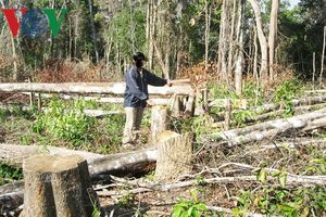 Thêm lời cảnh báo từ việc Ban quản lý rừng ở Gia Lai trục lợi