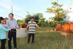 Khánh Hòa: Trao tặng bò giống cho hộ nghèo thị xã Ninh Hòa