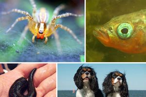 Chân dung top động vật có bộ não bí ẩn, kỳ quái nhất
