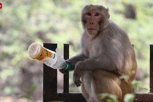 Một người đàn ông 70 tuổi bị khỉ ném chết, gia đình đâm đơn kiện đàn khỉ