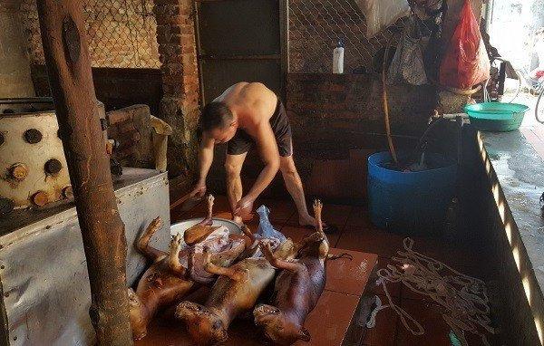 Làng lạ Việt Nam: Chuyện chưa từng kể ở ngôi làng ăn thịt chó mùng 4 Tết lấy may