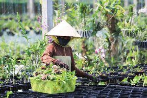 Cách ứng dụng những giải pháp công nghệ trong nông nghiệp