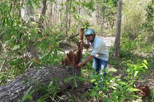 Ban Quản lý rừng phòng hộ Đắk Đoa (Gia Lai): Trục lợi hàng tỉ đồng ngân sách