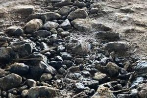 Clip: Nước mưa 'xuyên' cao tốc 1,6 tỷ đô chảy dưới mặt cầu chui