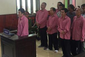 Tuyên án chín bị cáo trong vụ phá rừng ở Bình Định