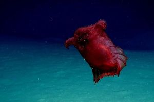 Lần đầu tiên phát hiện 'quái vật gà không đầu' ở Nam Cực