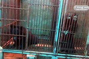 Thông tin người dân nuôi gấu trái phép tại nhà là không có cơ sở