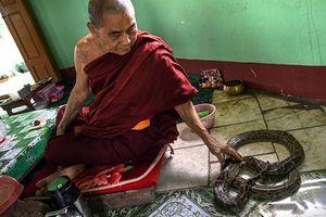 Vuốt ve trăn 'khủng' để cầu may ở Myanmar