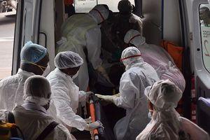 Bùng phát dịch 'sốt chuột' chết người ở Nigeria