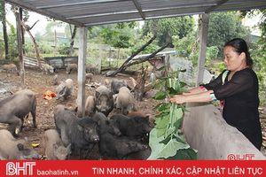 Nuôi lợn nít cung cấp dịch vụ mâm cỗ, mỗi năm thu vài trăm triệu