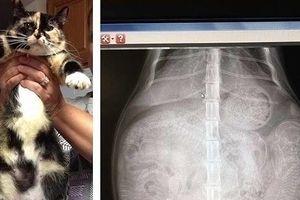 12 điều đáng kinh ngạc chỉ có thể nhìn thấy qua máy chụp X-quang