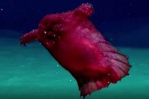 'Thủy quái gà không đầu' xuất hiện ở ngoài khơi Nam Cực