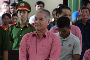 Bình Định: 9 bị cáo 'cạo trọc' rừng xanh lĩnh án 81 năm tù