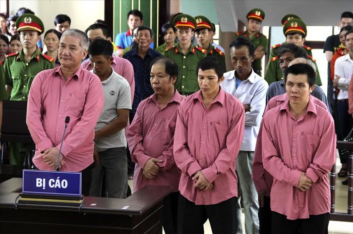 Bình Định: Tuyên án 9 bị cáo trong vụ phá rừng lớn nhất từ trước tới nay