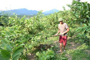Người tiên phong xin thoát nghèo ở Làng Han