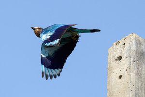 Chiêm ngưỡng thiên nhiên hoang dã tuyệt đẹp qua những bức ảnh