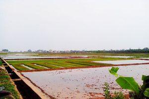 Cấp giấy chứng nhận quyền sử dụng đất nông nghiệp sau dồn điền, đổi thửa đạt 99,1%