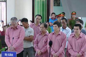 81 năm tù cho các bị cáo vụ phá rừng tại huyện An Lão