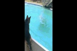 Mỹ: Giả vờ chết đuối, ngỡ ngàng trước hành động của chó
