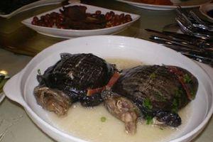 Kinh hãi món súp rùa sống nguyên con được xem là bổ thận tráng dương