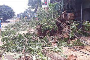 Bất thường lốc xoáy ở Đam Rông, Lâm Đồng