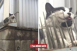 Những chú mèo 'chơi dại' khiến các 'sen' bị một phen hú vía