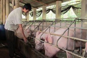 Xây dựng khung thể chế quốc gia chuỗi thực phẩm an toàn