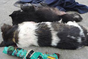 Hải Phòng: Bị đánh tử vong khi vào làng trộm chó