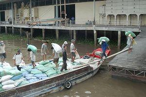 Xuất khẩu gạo, những bước đi vững chắc