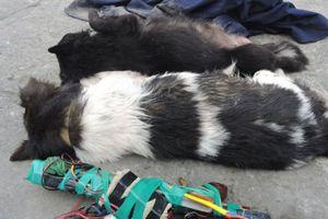 Hải Phòng: Một 'cẩu tặc' bị đánh tử vong