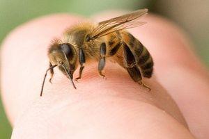 11 người bị ong rừng đốt thương vong