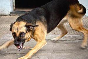 Cao Bằng: Bé trai 2 tuổi bị chó becgie 40kg tấn công