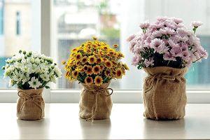 Mang hoa, cây cảnh vào phòng làm việc
