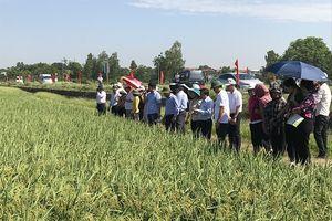 Nghiên cứu, sản xuất giống cây trồng: Doanh nghiệp thiếu mặn mà