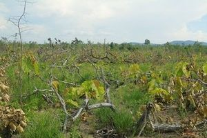 Bắt đối tượng tự xưng phóng viên tham gia hủy hoại rừng