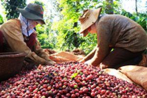Nâng chất cho cà phê Việt