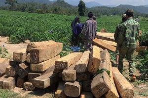 Lâm tặc bị nhóm đối tượng chém xối xả để cướp gỗ tang vật