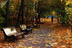 Ngắm mùa thu vàng lãng mạn ở Moskva