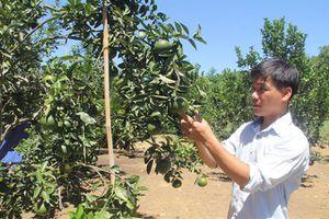 Chàng trai trẻ thu tiền tỷ nhờ vườn cây trái trồng trên vùng đất hoang