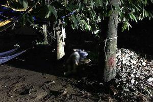 Phát hiện nam thanh niên chết bí ẩn dưới gốc cây ở ngoại ô Sài Gòn