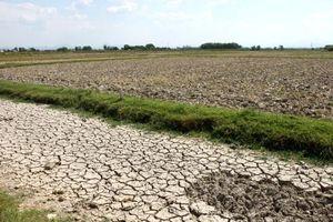 Nguy cơ hạn mặn trong vụ lúa Đông Xuân 2018-2019