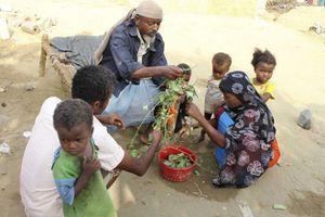 Một nửa dân số Yemen đối mặt với nạn đói
