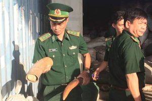Phó Thủ tướng biểu dương các đơn vị bắt giữ hơn 10 tấn ngà voi, vảy tê tê