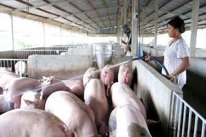 Ổn định cung - cầu thịt lợn
