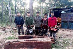 Cưa hạ gỗ quý Vườn Quốc gia Yok Đôn, 5 thanh niên ra đầu thú
