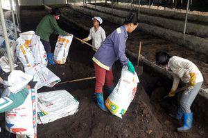 Đáng nể 'lão nông' nuôi giun quế chỉ để trồng cam sạch, thu vài tỷ đồng một năm