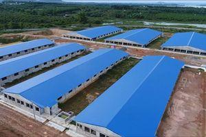 Toàn cảnh trại heo 'khủng' ở đầu nguồn cung cấp nước cho hơn 10 triệu dân