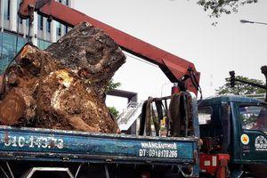 'Đường đi' của các loại cây xanh bị đốn hạ ở TP HCM