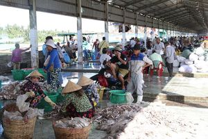 Đầu tư 95 tỷ đồng nâng cấp cảng cá Tắc Cậu