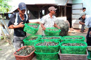 Khuyến khích tăng diện tích nuôi tôm, cá đón đầu thị trường
